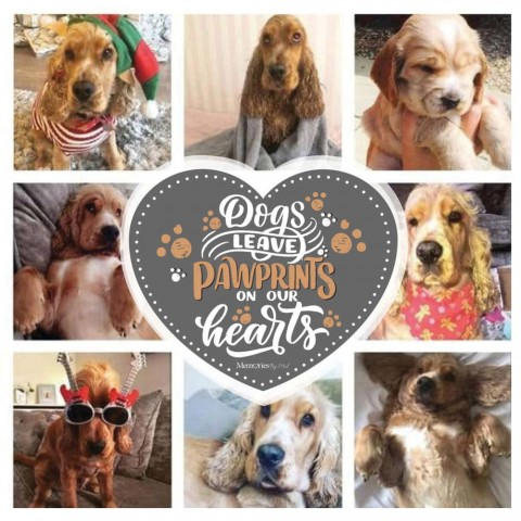 Dogs Leave Pawprints Photo Blanket