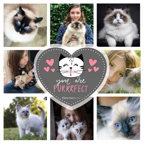 You Are Purrfect Photo Blanket